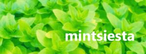 mintsiesuta