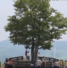 恋愛成就の木